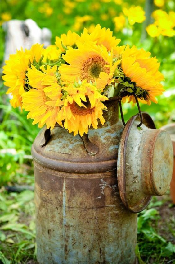 Sunflowers in an antique milk can / http://www.deerpearlflowers.com/rustic-country-milk-jug-wedding-ideas/