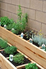 herbs garden by the brick wall or fence wall...
