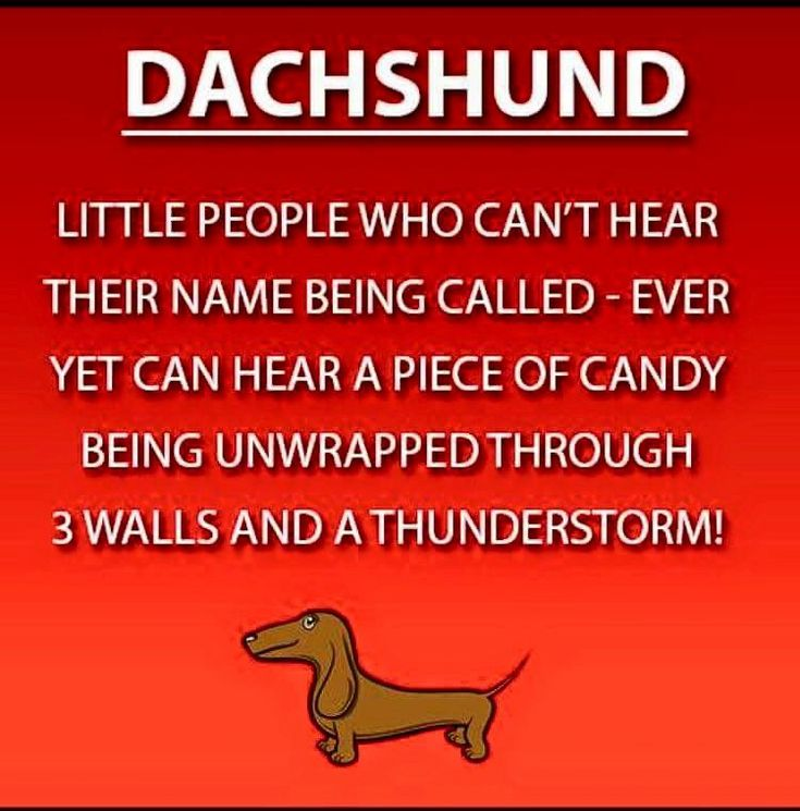 So True ! Dachshunds and their selective hearing