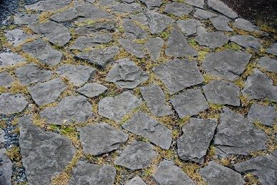 Groundcovers That Tolerate Light Foot Traffic