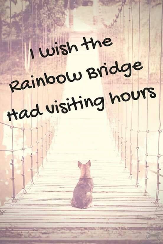 """I wish the rainbow bridge had visiting hours."" catquotes"