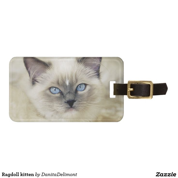 Ragdoll kitten tag for luggage
