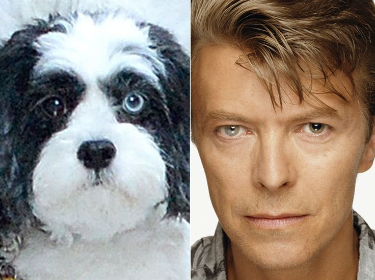 David Bowie's pet dog Max has different coloured eyes – exactly like his owner | Metro News