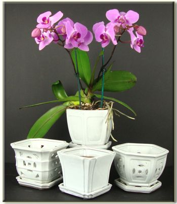 Vanilla Orchid Pots...sooo pretty. Would love to repot everything in these open air ceramic pots.plus they come with a plastic pot inside.