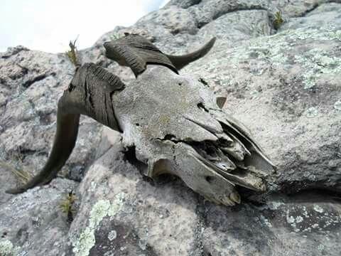 Skull Photo: Pablo Medina