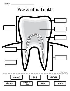 Dental Health Tooth Diagram Freebie | Secor Squared TPT