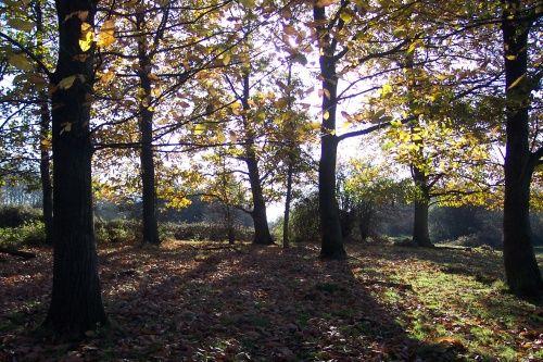 Hatfield Forest Country Park near Bishops Stortford