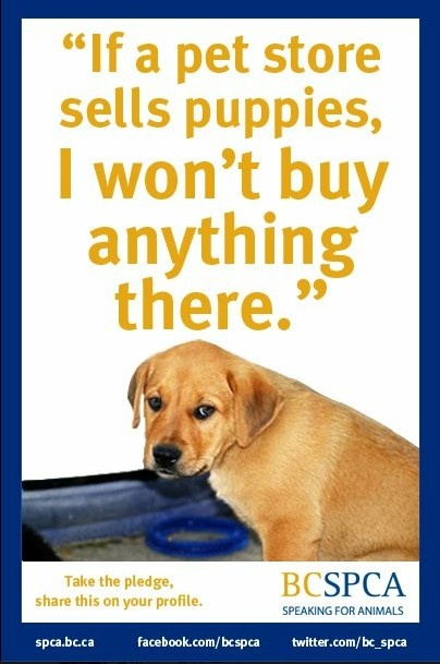 How to stop Puppy Mills! ❤️Make a commitment to not buy anything from a pet store that sells puppies❤️