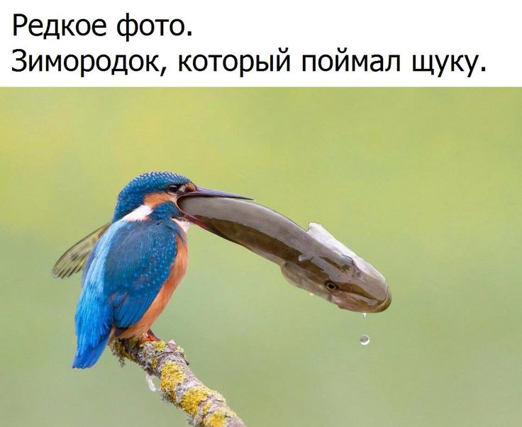 MirFactov - все самое интересное!