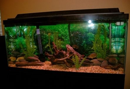 30 Gallon Freshwater Tropical Fish Tank All the driftwood in this tank is natural that I found in the lake also the rocks were found in the river. All the plants are artificial plants.