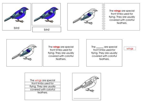 Bird Definition