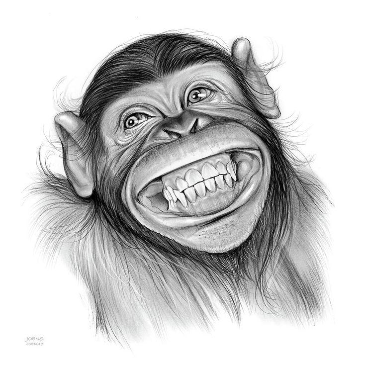 Рисунки прикольные обезьяны