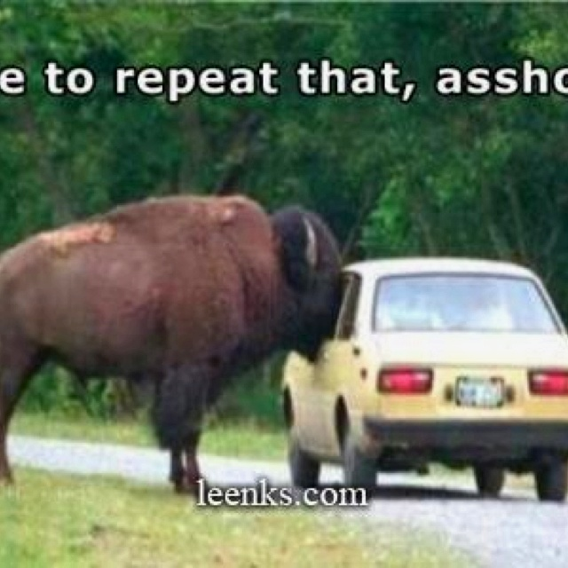 You've got to laugh: Police Offices, Buffalo, Bison, Funny Pictures, Farms, Hilarious Animal, Funny Stuff, Pretty Fast, Hilarious Photos