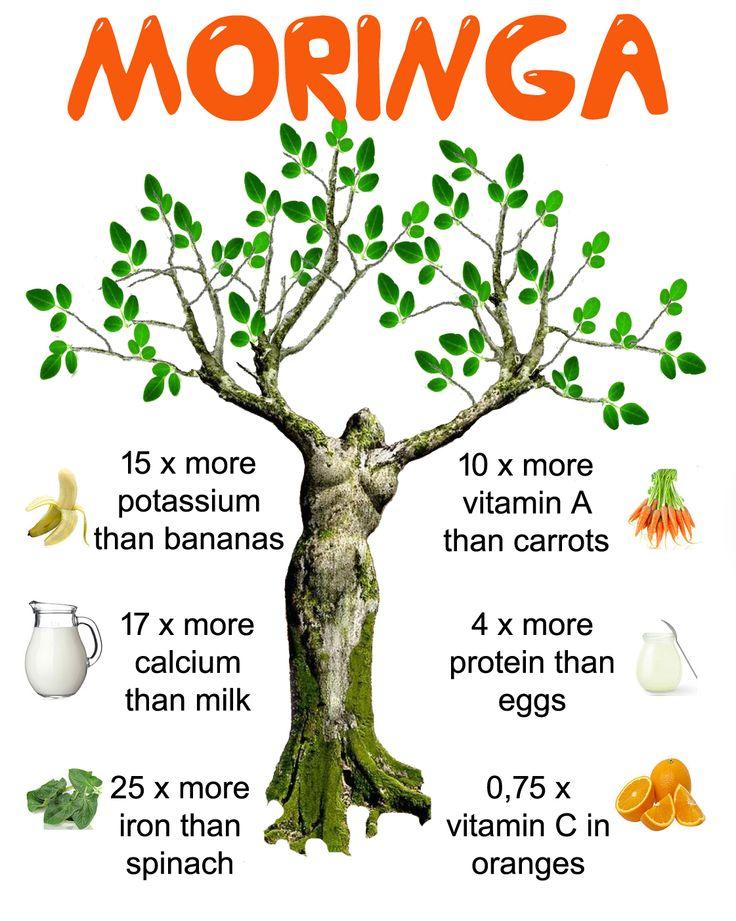 Moringa Oleifera, A Supermarket On A Tree