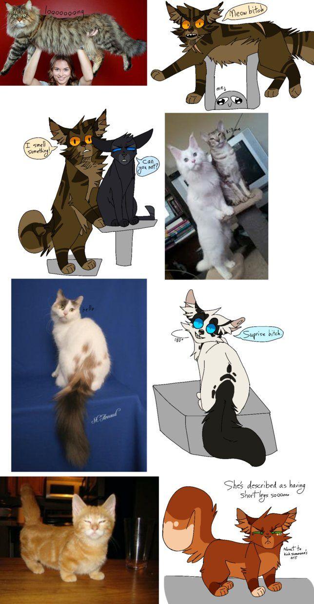 Sketch Dump Yyaaaaayyy By Acorn Trees Warrior Cats Pinterest