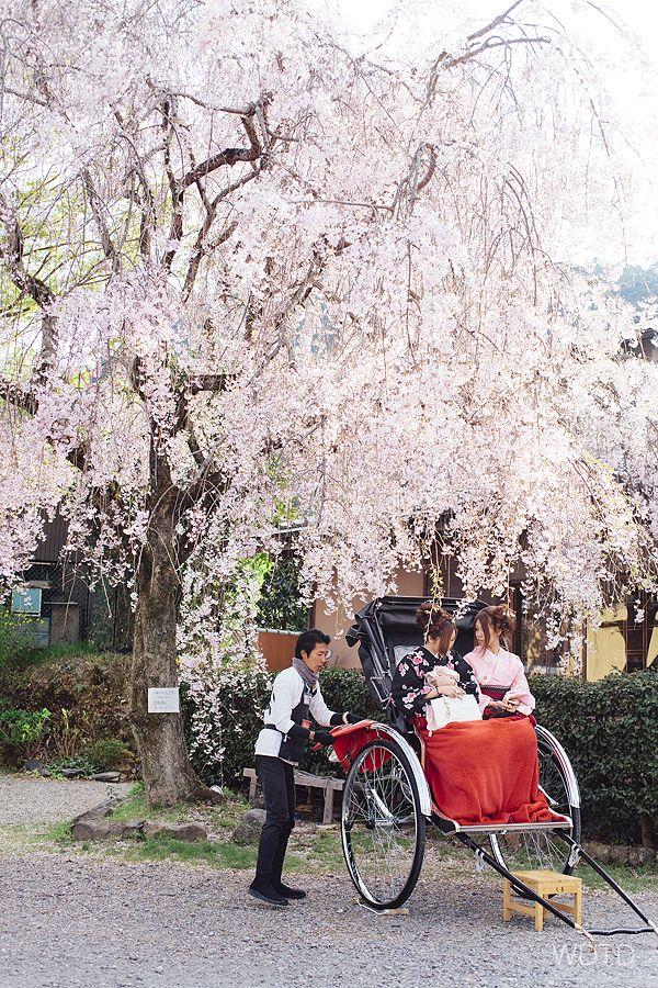 ARASHIYAMA (嵐山) Cherry blossom