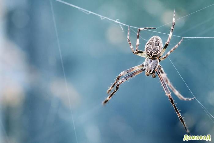 10 простых способов, чтобы избавиться пауков