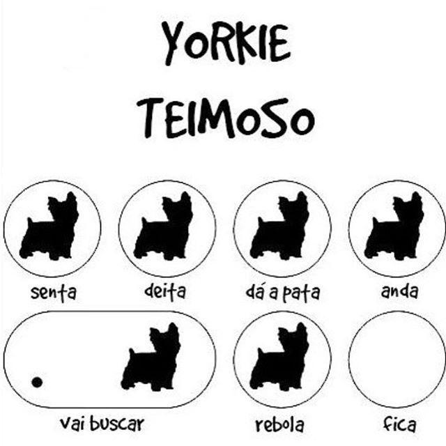 #cachorroétudodebom  #cachorro #amocachorro  #york  #yorkshire #petmeupet