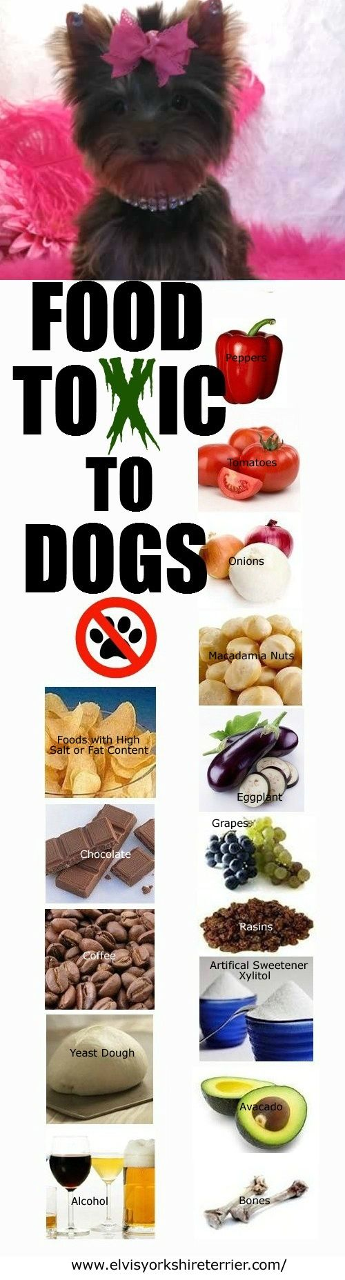 These foods are TOXIC to dogs! Be careful!태양성카지노태양성카지노태양성카지노태양성카지노태양성카지노 태양성카지노태양성카지노태양성카지노태양성카지노 태양성카지노태양성카지노태양성카지노태양성카지노태양성카지노태양성카지노태양성카지노태양성카지노태양성카지노태양성카지노태양성카지노태양성카지노태양성카지노태양성카지노태양성카지노태양성카지노 태양성카지노태양성카지노태양성카지노태양성카지노 태양성카지노태양성카지노태양성카지노태양성카지노태양성카지노태양성카지노태양성카지노태양성카지노태양성카지노태양성카지노태양성카지노