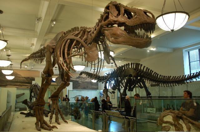 Voyage à New York (3), Musée d'histoire naturelle et Macy's