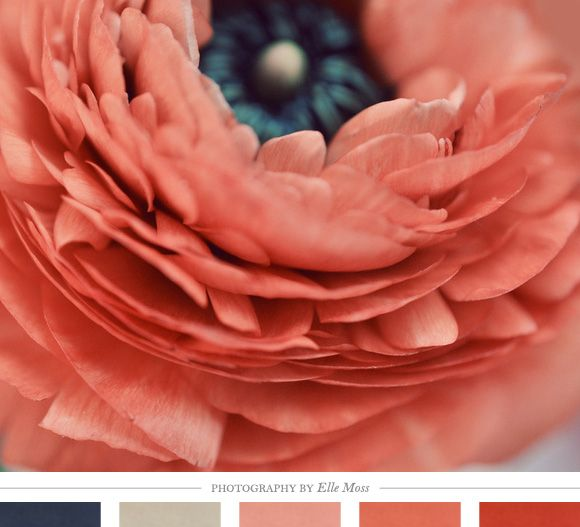 Color Inspiration Daily: 08. 13. 12 - Home - Creature Comforts - daily inspiration, style, diy projects + freebies