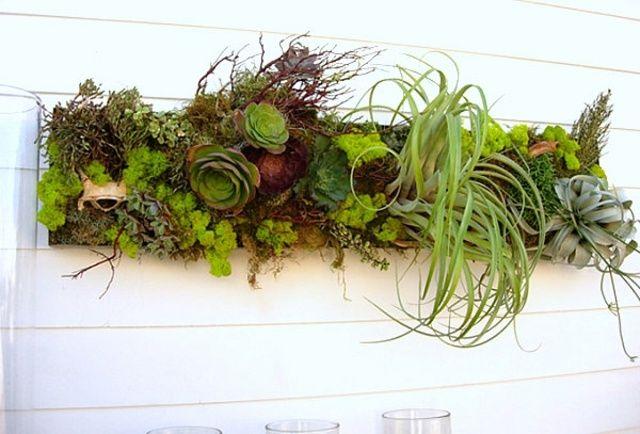 1000 Id Es Sur Le Th Me Arrangements De Plantes Grasses Sur Pinterest Pot Plante Grasse