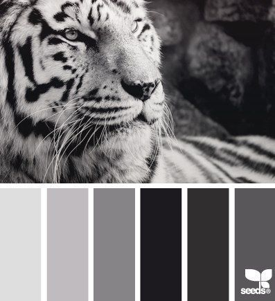 design seeds black and white.
