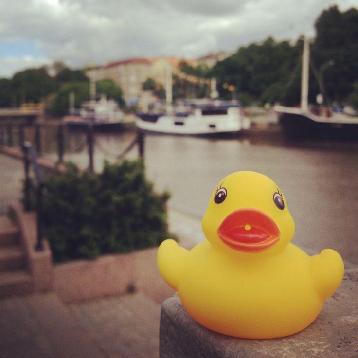 Jotkut ankat ovat jo käyneet tutustumassa kisapaikkaan – Turun Aurajoen jokirantaan! #Turku #Ankkaralli #Duckrace