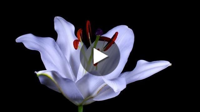 http://cantinhodovideo.com/wp-content/uploads/2014/11/metaTHUMB210.jpg