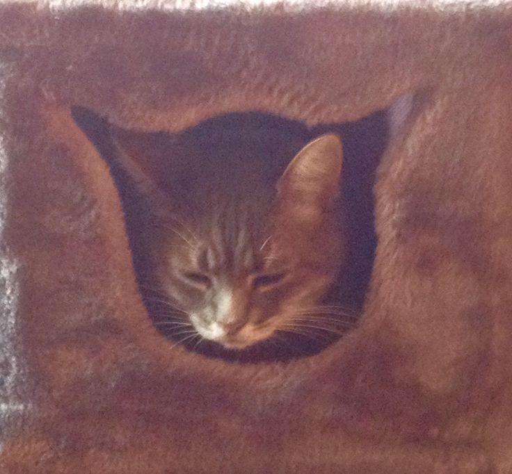 Eh oui c est moi dans mon arbre à chat...