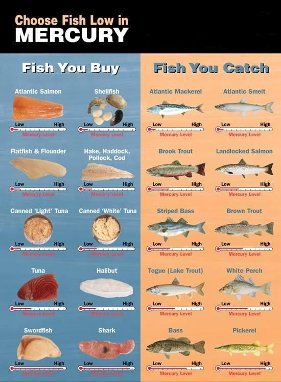 choose the fish which is low in mercury http www