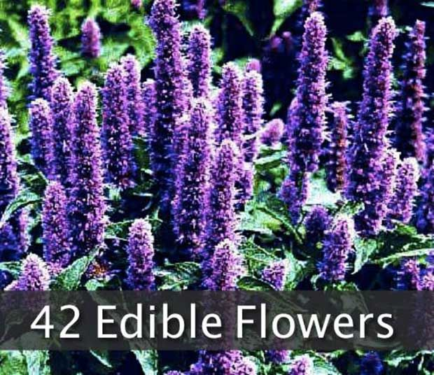 42 Flowers You Can Eat - SHTF, Emergency Preparedness, Survival Prepping, Homesteading