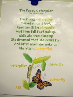 Discoveries of a Teacher: Hungry Caterpillars and Beautiful Butterflies