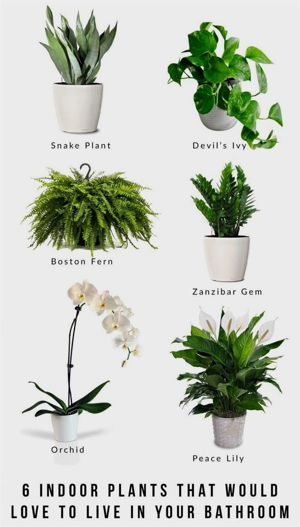 Where To Find The Best Plants For Your Landscaping Hanging Plants Indoor Hanging Plants Bathroom Plants