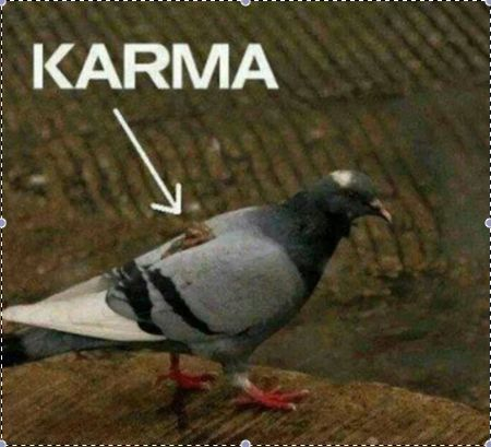 Le karma | Daily Social Fail