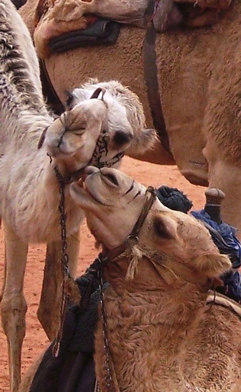 Giordania- Wadi Rum