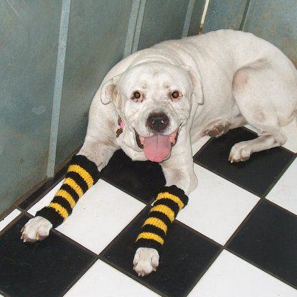 Dog Leg Warmers Knitting Pattern : hermione j. schwartz: Mouses Steelers Striped Leg Warmers: Knit Pattern ...