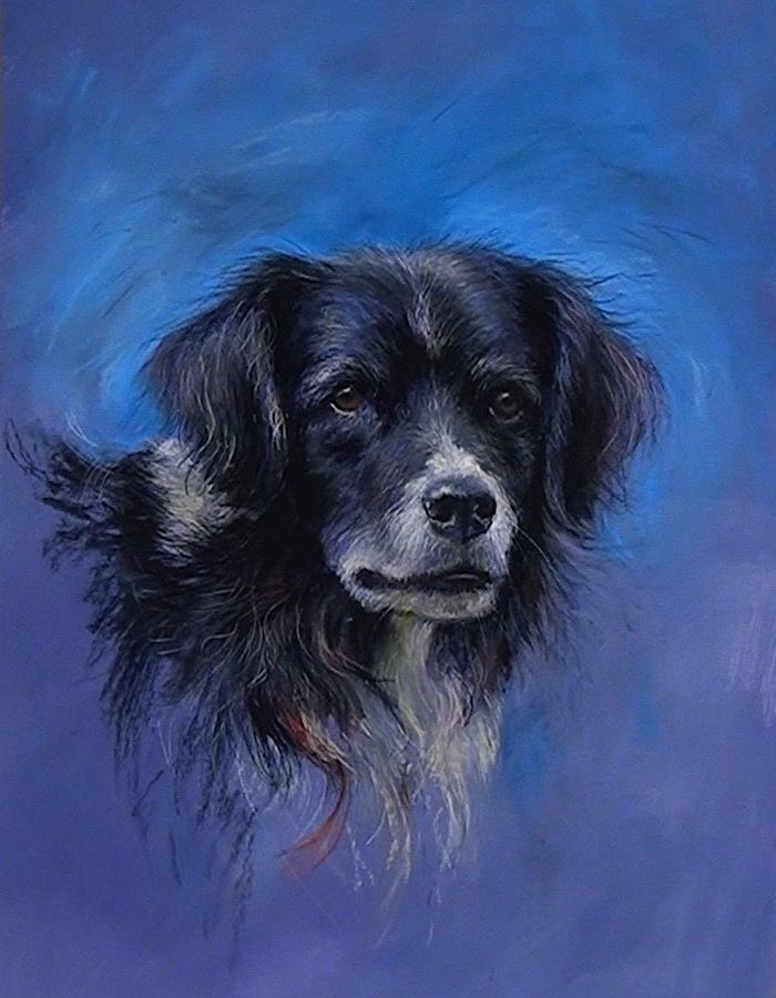 Join ArtTutor instructor Rebecca de Mendonça in this pastel portrait lesson of a Collie Dog.   This class, in a contemporary style, has plenty of tips and techniques for getting the structure of your animal portrait correct, whilst also adding energy and life to your subject.