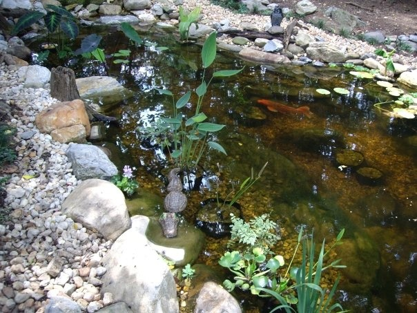 Large double waterfall koi pond.  It is a labor of love!