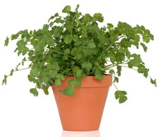 Want to learn how to grow herbs? You can with our FREE