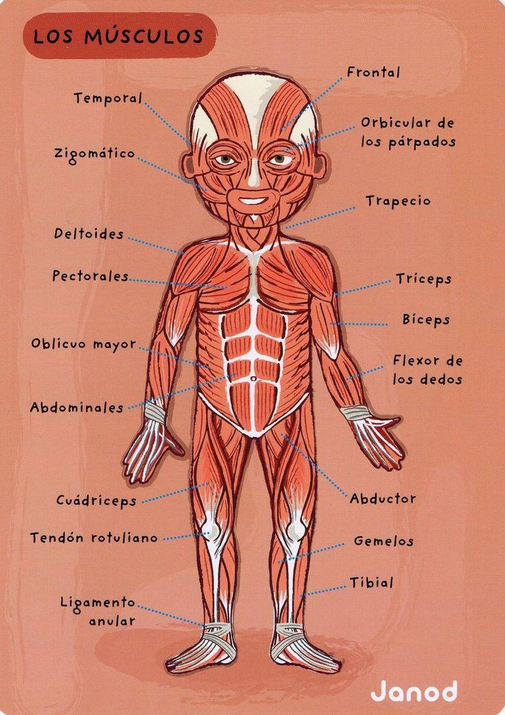 Mejores 8 imágenes de Anatomia - pie y tobillo. en Pinterest ...