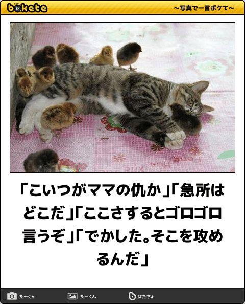 spotlight-media.jp article 258752783655277323 image 1458002153375