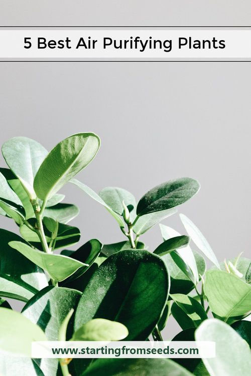 Air Purifying Plants For Bedroom: 19 Best Posts About Indoor Plants Images On Pinterest