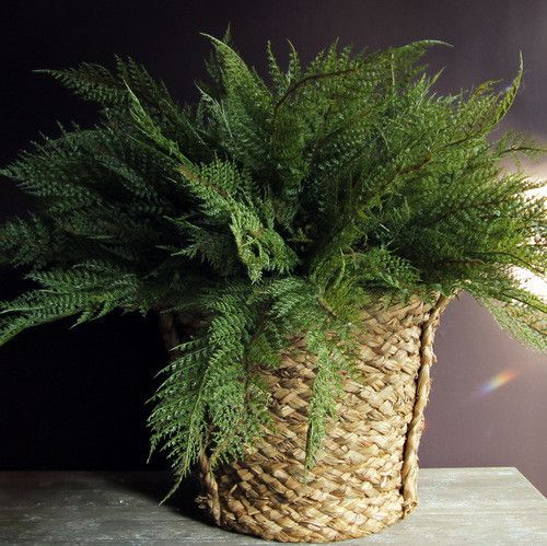 Forest Fern £16 Faux Flowers (all prices are for a single stem)