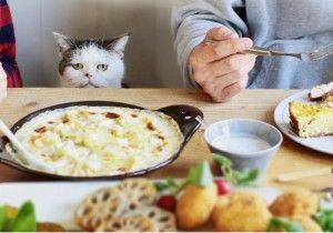& MAKO まこという名の不思議顔の猫の家 第6回