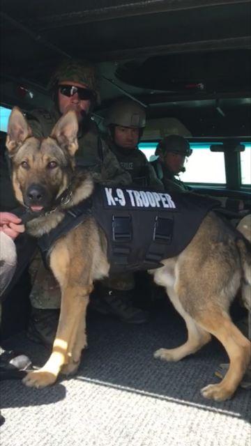 K9 Trooper Riggs receives his bullet/stab proof vest http://www.ri.gov/press/view/27862