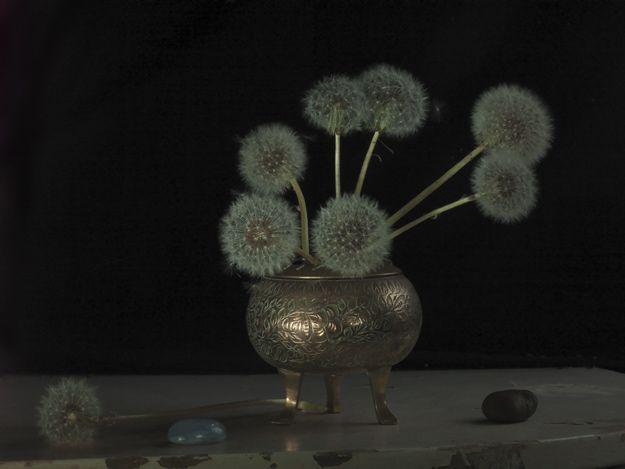 Fiona Pardington Grandma's Incense Burner & Dandelion Clocks Inkjet print on hahnemule cotton rag Edition of 10 2012