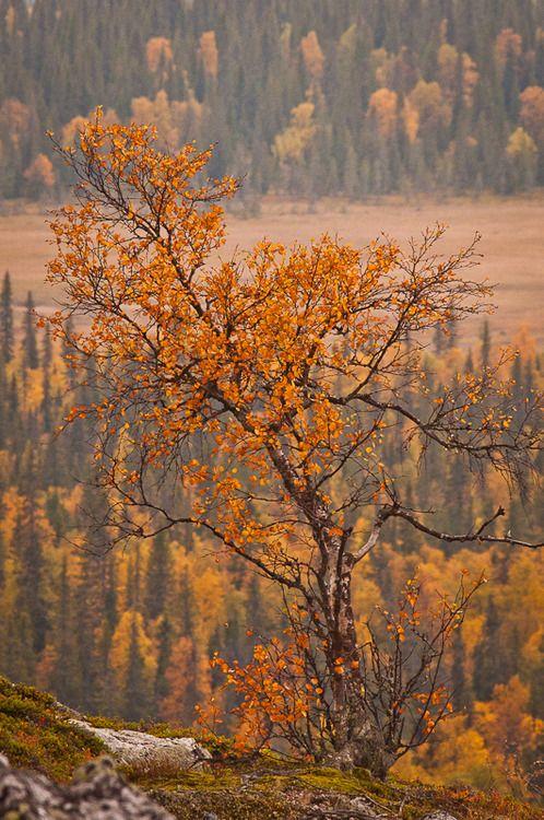 Autumn in Lapland