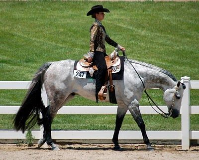 A striking grey Quarter Horse loping. Horse event pictures, Performance spotlight.