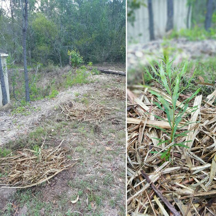 Banksia 7Jan17